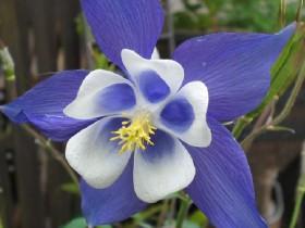 Какие есть неприхотливые цветы для дачи - советы