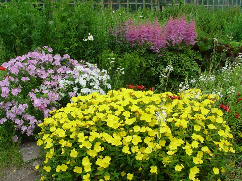 Primrose and landscape design.