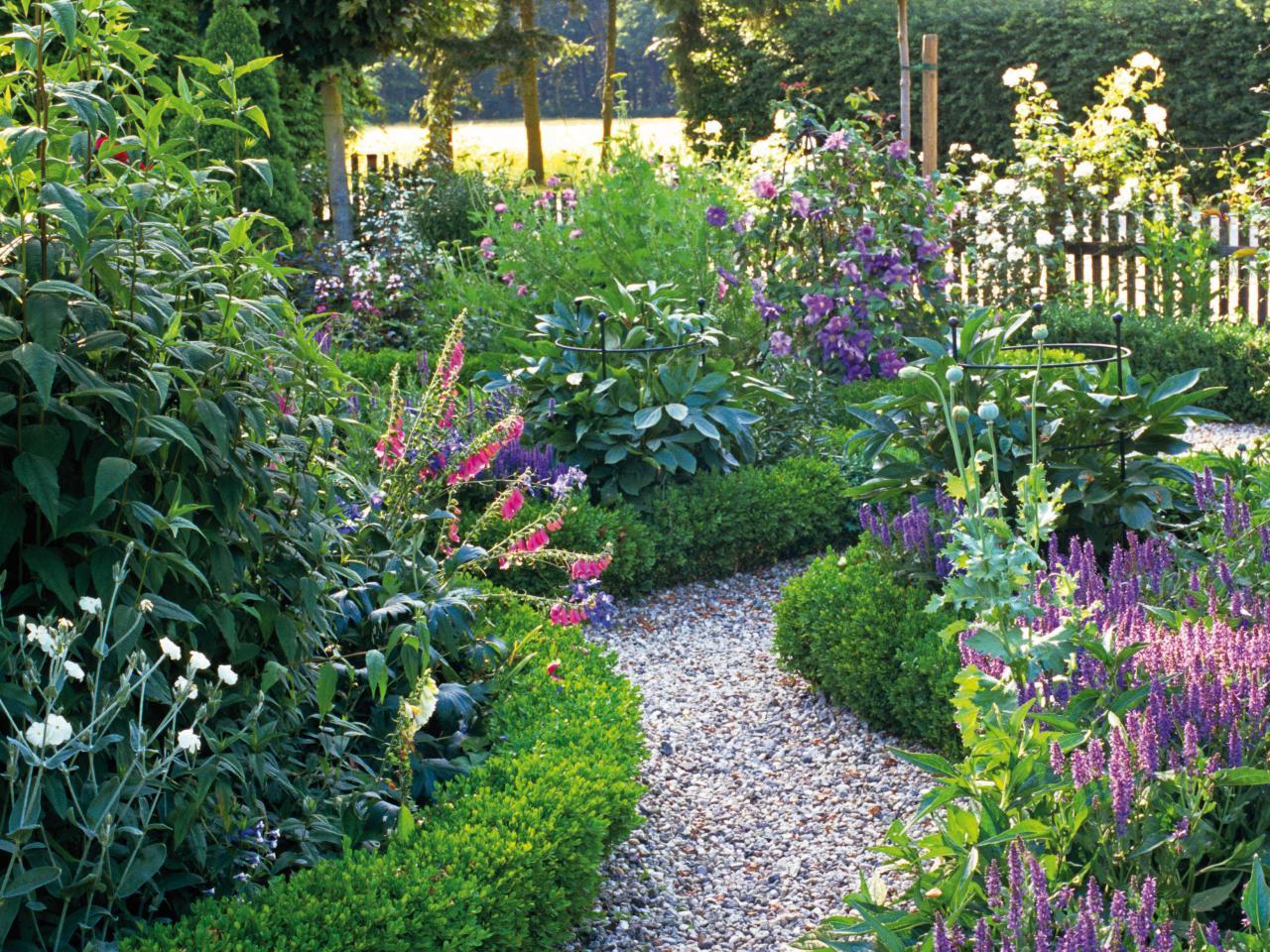 Akvilegiya in a garden.
