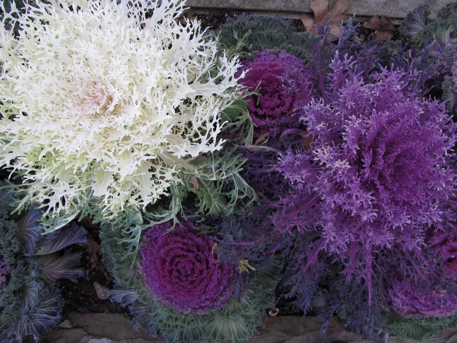 Изысканное сочетание белого с фиолетовым.