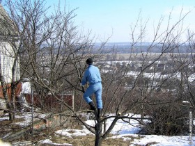 Весенняя обрезка деревьев.