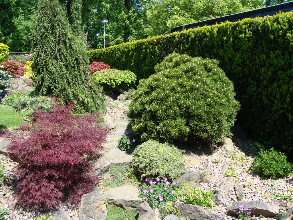 Thuja on the site. Example of landscape design.