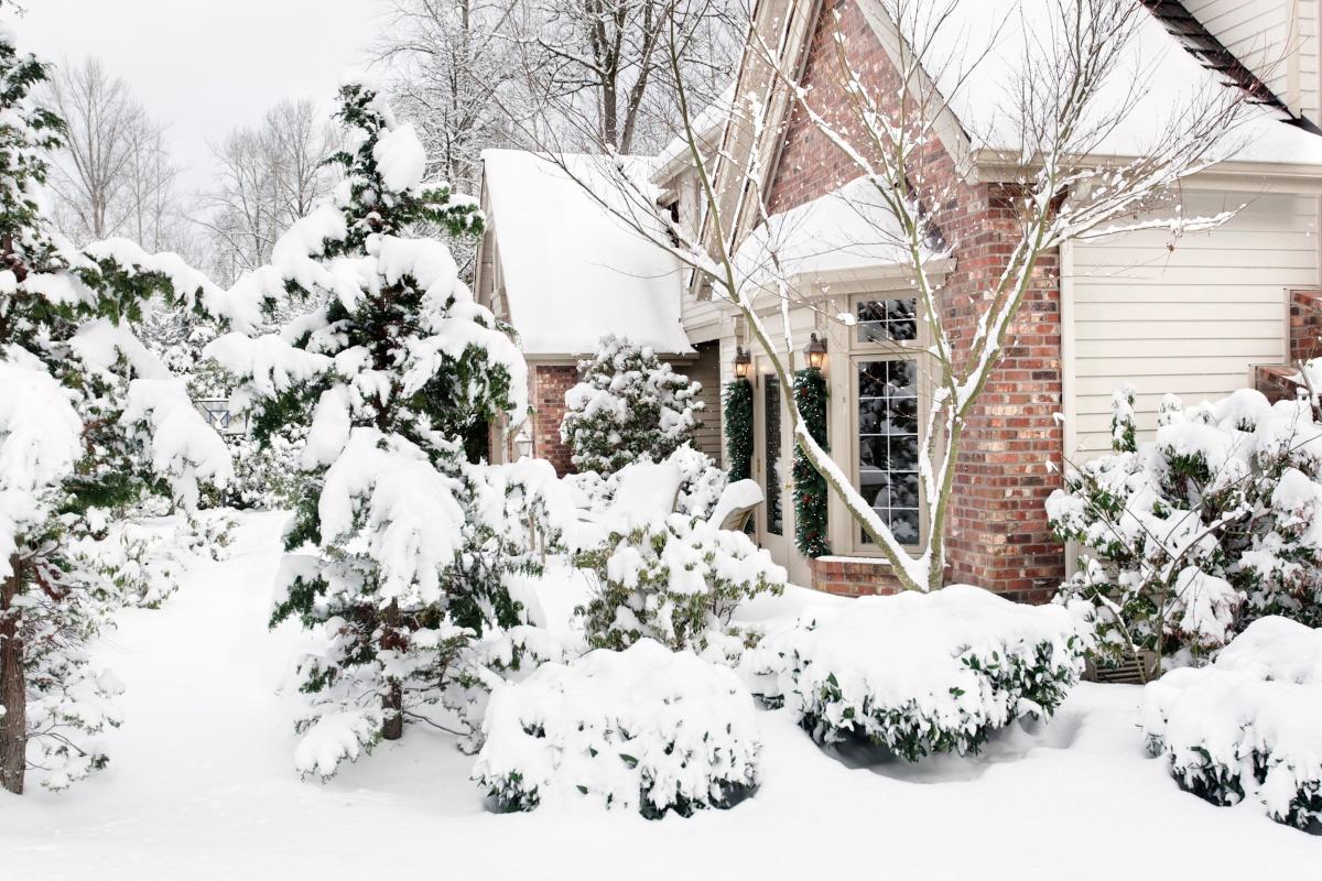 Зимний сад.
