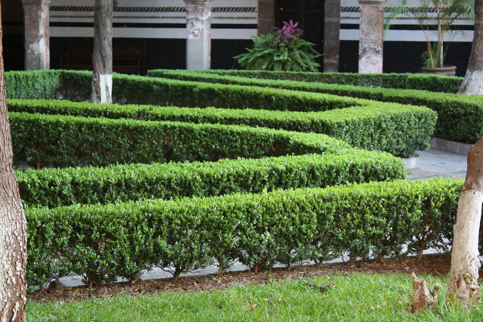 На фото: оригинальные изгороди из самшита.