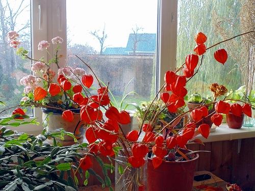 """Chinese lanterns"" window."