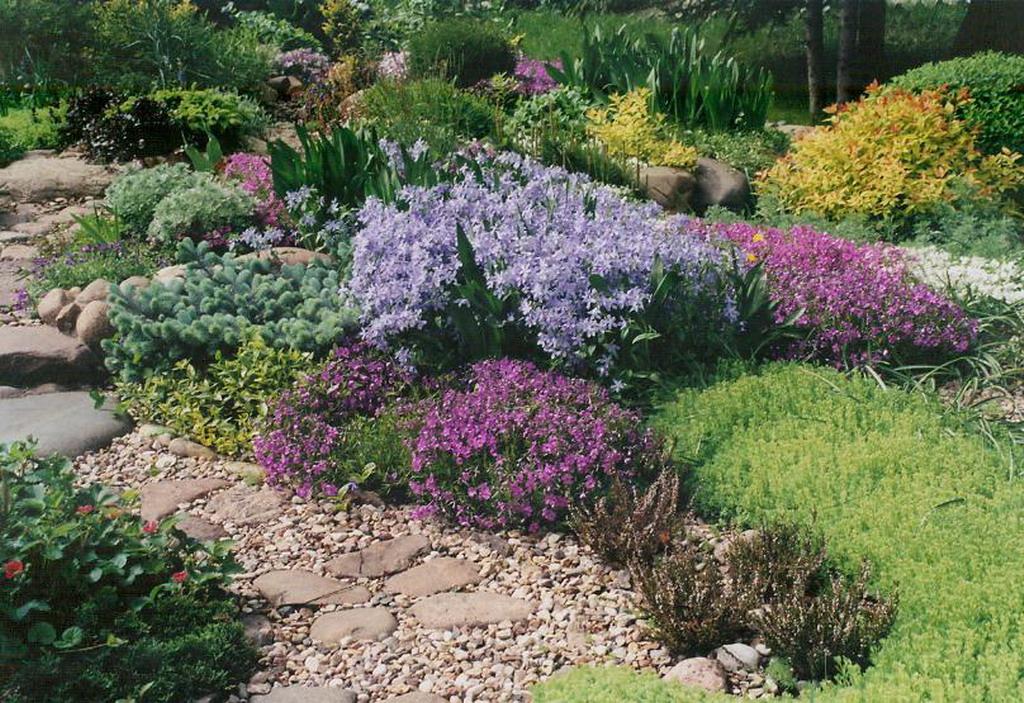 На фото: колокольчики в садовом ландшафте.