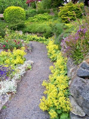 Кращі вуальные рослини