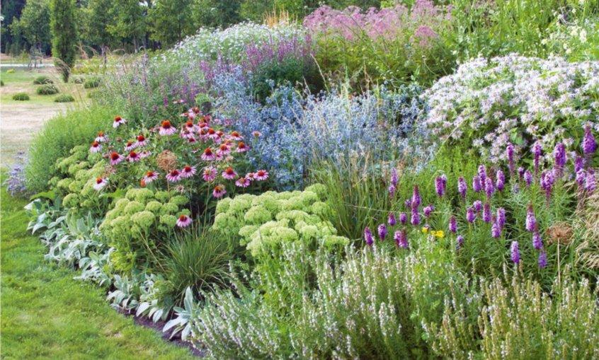 Сочетание многолетних цветов