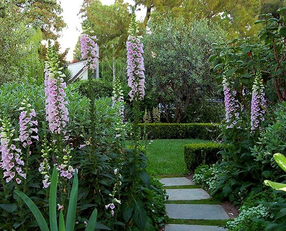 Digitalis and landscaping.
