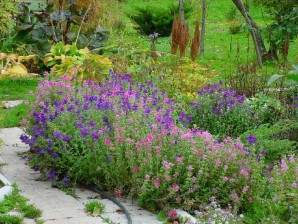 Medicinal plants for your garden