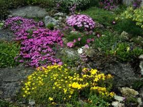 Почвопокровные растения в саду.