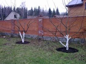 Правильно обрезанные плодовые деревья.