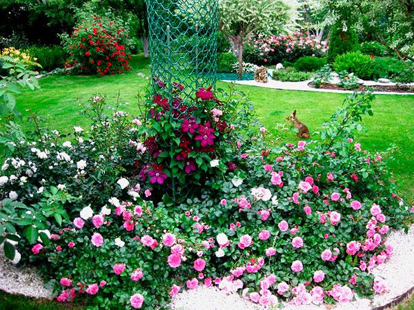 Розы и ландшафтный дизайн.
