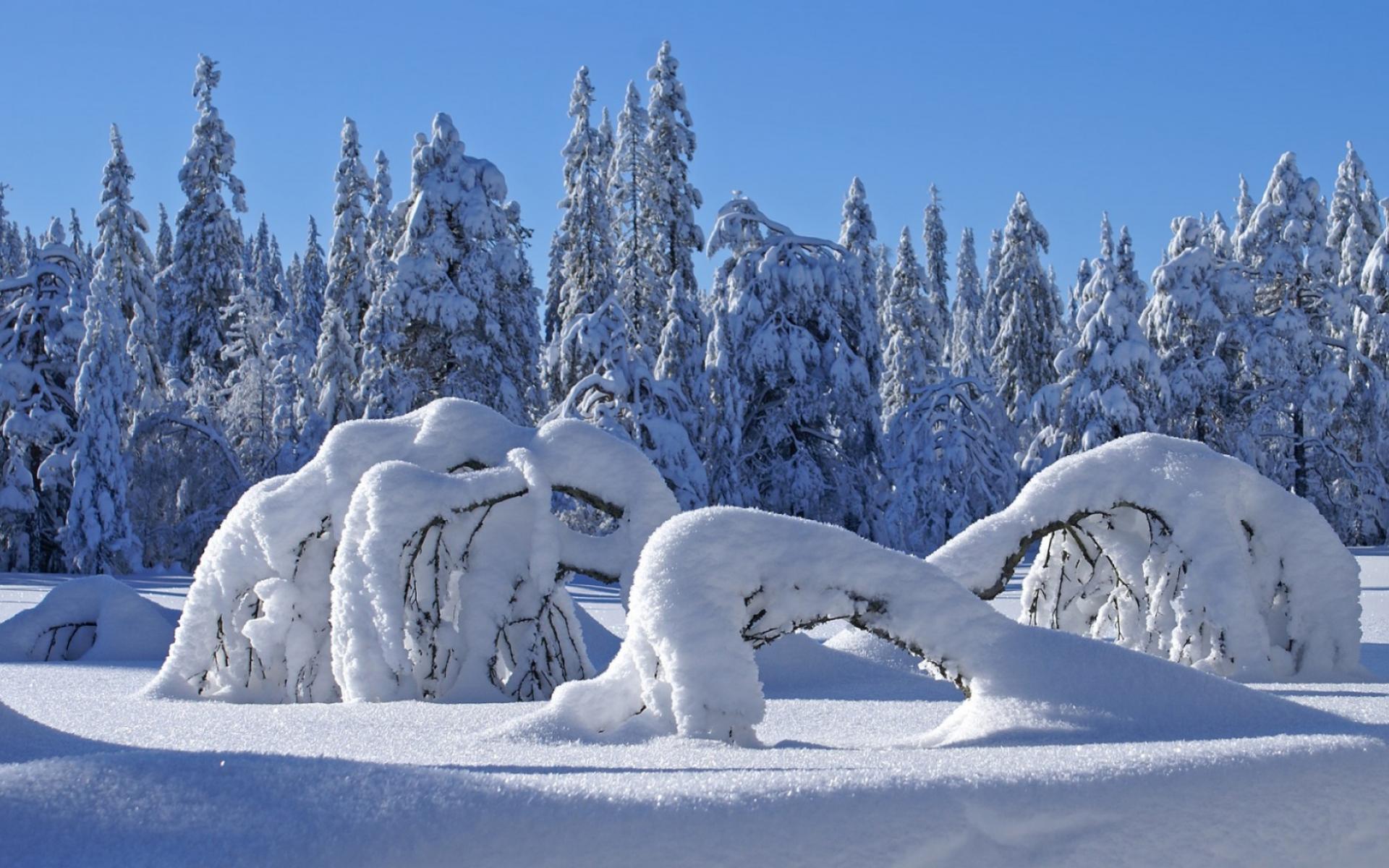 Сніжна зима.