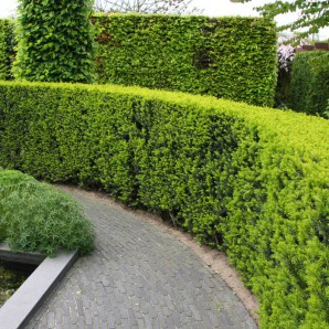 Strict hedges-fences: the best types to fit 25 photo