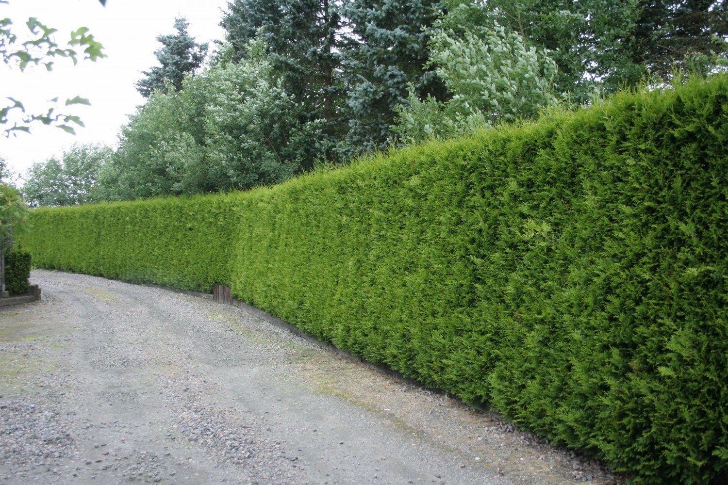 Bozdag hedges.