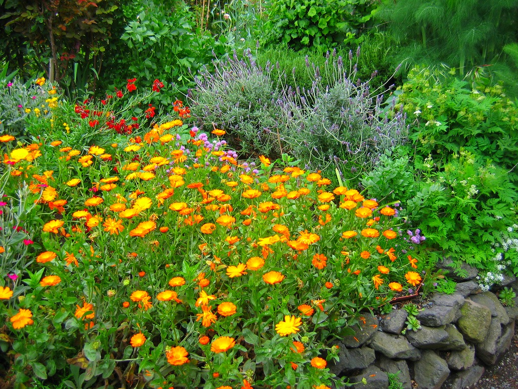 Flower garden by planting marigolds on the plot.
