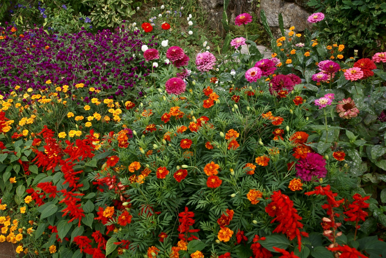 Zinnias and other culture in group plantings.