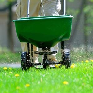 Использование разбрасывателя-сеялки для подкормки газона
