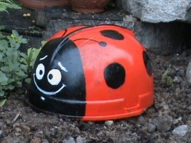The idea for the garden: ladybug from the helmet