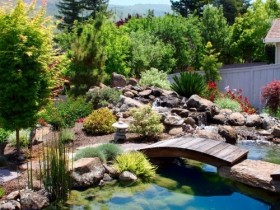Pond landscape design