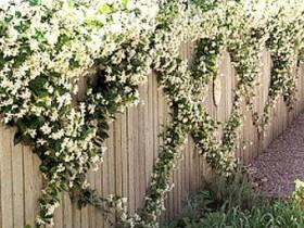 Садовое ограждение, замаскированное растениями
