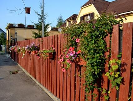 Забор, украшенный декоративными кустами
