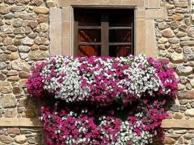 Vertical gardening balconies