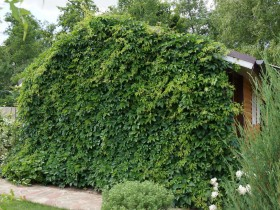 Vertical gardening garden buildings