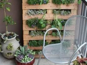 Vertical gardening in the area