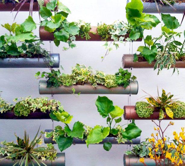 Идеи вертикального озеленения фото