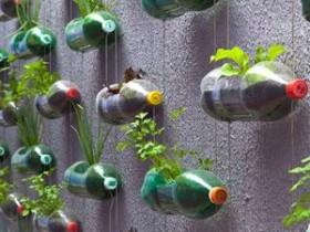 Vertical gardening garden in plastic bottles