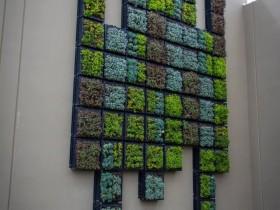 Kreativna the idea of vertical gardening