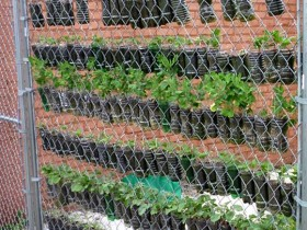 Vertical gardening on the grid