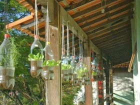 Vertical gardening with plastic bottles