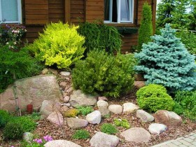 Alpine garden with conifers
