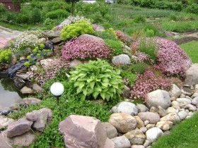 Alpine garden with low-growing plants