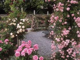 Розы в английском саду