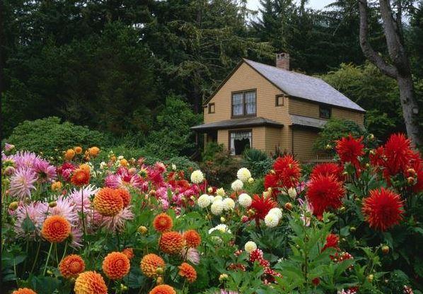 Создание ароматного сада на дачном участке