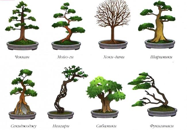Основные формы бонсая
