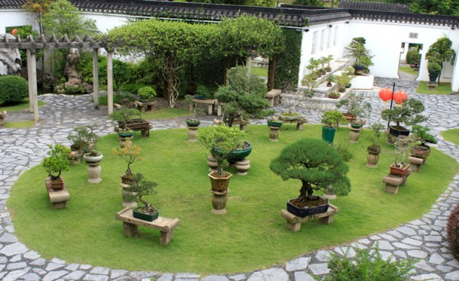 Деревья бонсай в саду