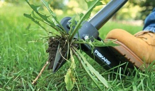 Механическая борьба с сорняками с помощью инструмента