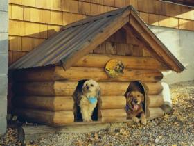 Собачья будка для двоих