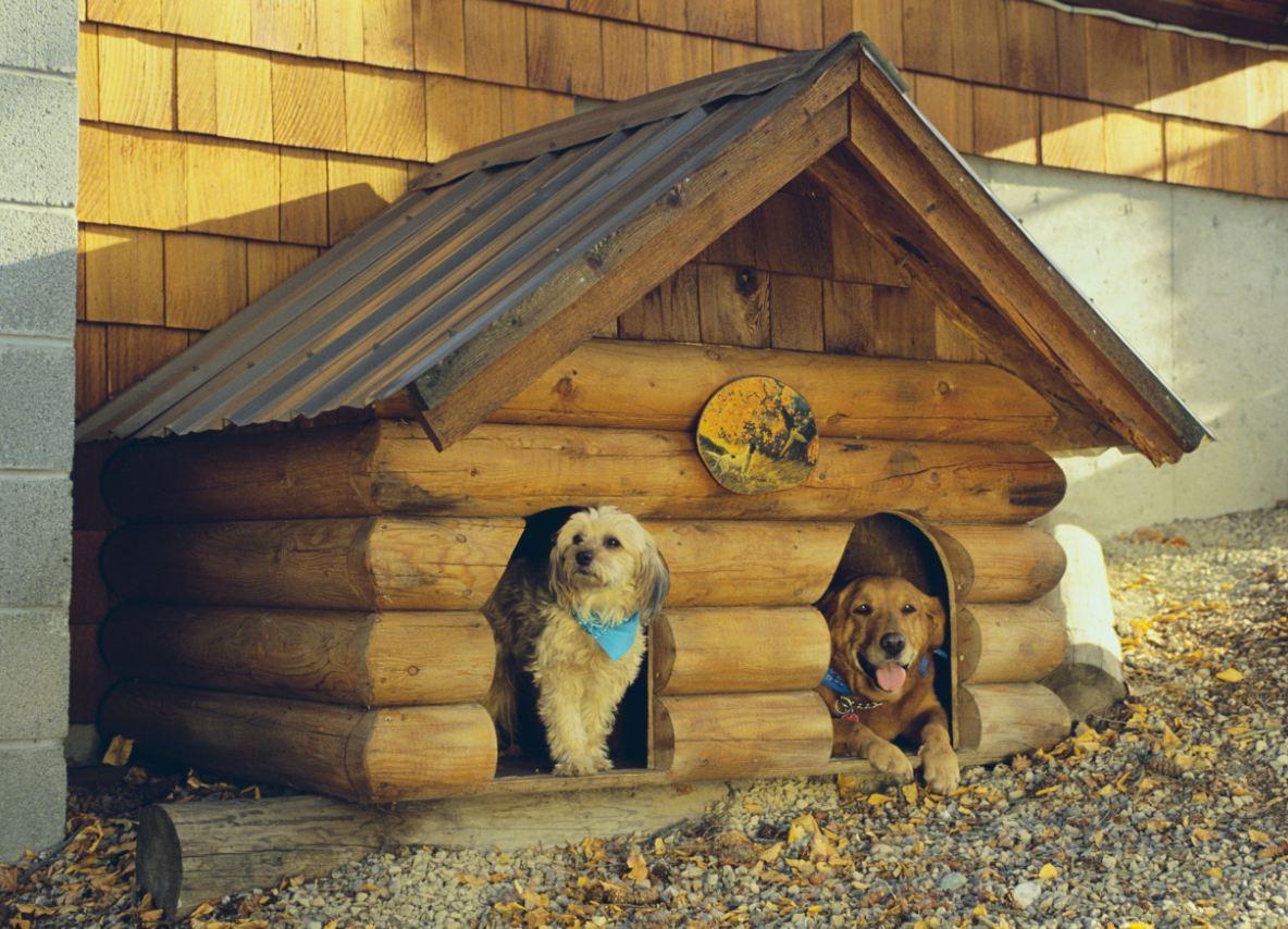 Оригинальная собачья будка своими руками