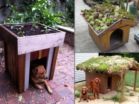 Kennel for dog with green roof
