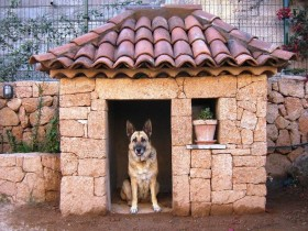 Stone box for dogs