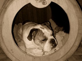 Dog house from a barrel