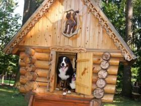 Luxury kennel for the dog with frame