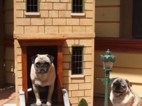 Двухэтажная кирпичная будка для собакиДвухэтажная кирпичная будка для собаки