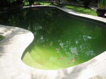 Вода «зацвела»